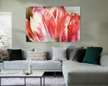 Tulpenblüte von Roswitha Lorz
