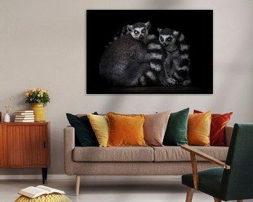 Deux lémuriens à queue en anneau s'étreignent et vous regardent depuis l'obscurité, mâle et femelle. sur Michael Semenov