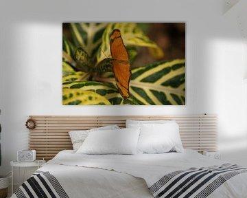 Dryas julia vlinder von Ronald en Bart van Berkel