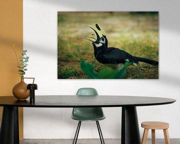 Etende neushoornvogel van Floris Verweij