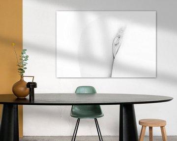 Artistiek Naakt van Billen en een Vagina in High Key Zwart Wit van Art By Dominic