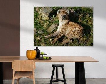 Gevlekte hyena  von Ronald en Bart van Berkel