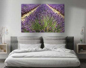 Veld met bloeiende lavendel in de Provence, Frankrijk van Dieter Walther