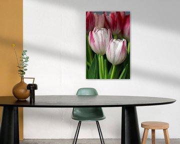 Tulpen duo von Roswitha Lorz