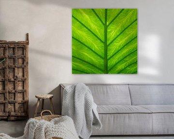 Tropische grüne Blätter von Christa Stroo fotografie