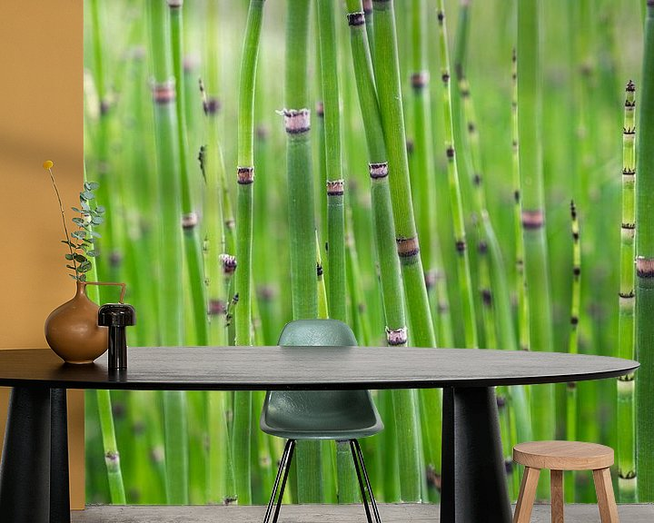 Beispiel fototapete: Kleiner Bambus im Garten des Schlosses Villandry von Christa Stroo fotografie