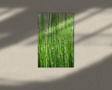 Kleiner Bambus im Garten des Schlosses Villandry