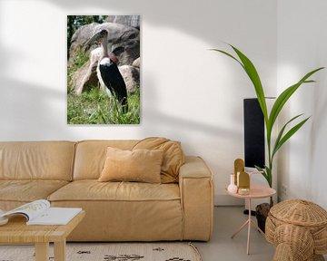 Afrikaanse maraboe von Ronald en Bart van Berkel