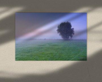 Mist weiland en boom