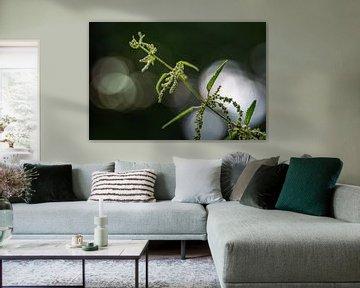 Fleur d'ortie (Urtica dioica) en macrophotographie abstraite avec une profondeur de champ très étroi