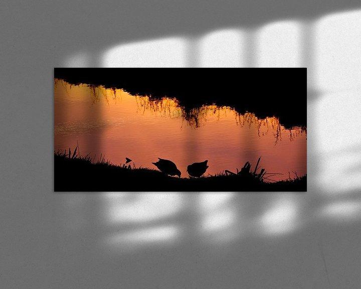 Sfeerimpressie: Waterhoentjes in avondlicht van CreaBrig Fotografie