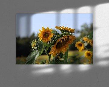sommertage von Alexandra Joseph Reisefotos und Landschaftsbilder