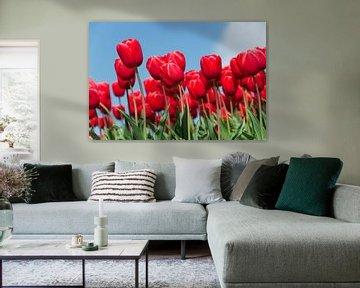 Rode tulpenveld van Rob Donders Beeldende kunst