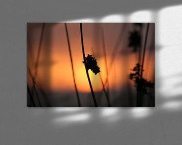 silhouette van Rick Nijman