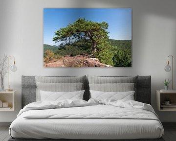 Baum auf der Bergesspitze von Hans-Jürgen Janda