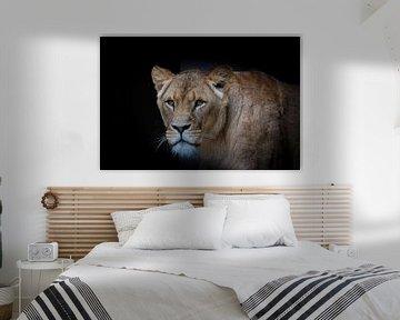 Löwin auf Schwarz von Janine Bekker Photography