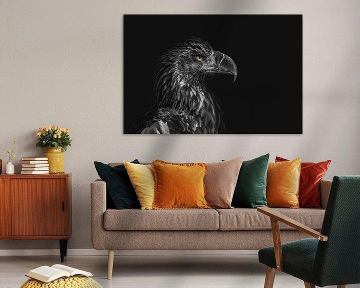 Beispiel: Adlerporträt mit dunklem Hintergrund, Blick nach rechts von Steven Dijkshoorn