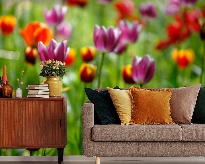 Beispiel fototapete: Bunt blühendeTulpen,  (Tulipa), Deutschland von Torsten Krüger