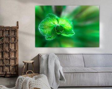 Green orchid flower  van Ursula Di Chito