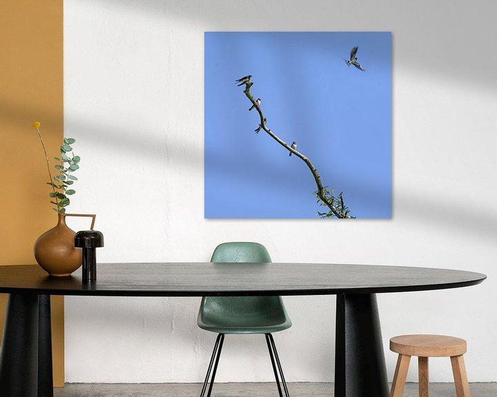 Impression: Groupe d'hirondelles rustiques (Hirundo rustica) assises sur une branche dénudée, l'un des oiseaux s sur Maren Winter