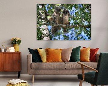Jonge ransuil (Asio otus) zittend in boom, Duitsland van Frank Fichtmüller