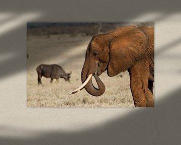 Éléphant dans les plaines africaines du Kenya