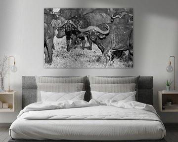 Bison africain dans les plaines herbeuses du Kenya en noir et blanc