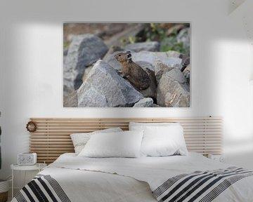 Pika Glacier National Park Montana USA van Frank Fichtmüller