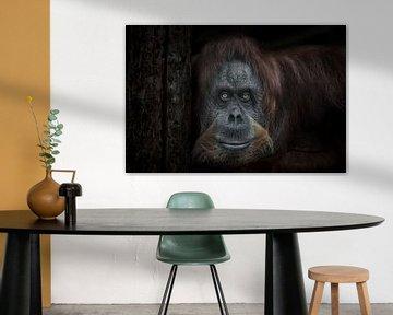 Droevige en wijze vrouwelijke orang-oetan kijkt vol gezicht met haar hoofd leunend tegen een boom zw van Michael Semenov