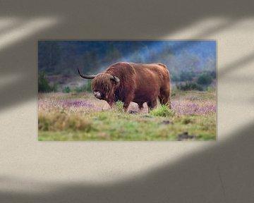 Ein schottischer Highlander-Bulle von Anneke Hooijer
