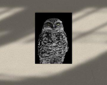 Uil bewerkt in zwart wit met de ogen in kleur