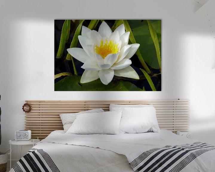 Beispiel: Weiße Seerose von Anjo ten Kate