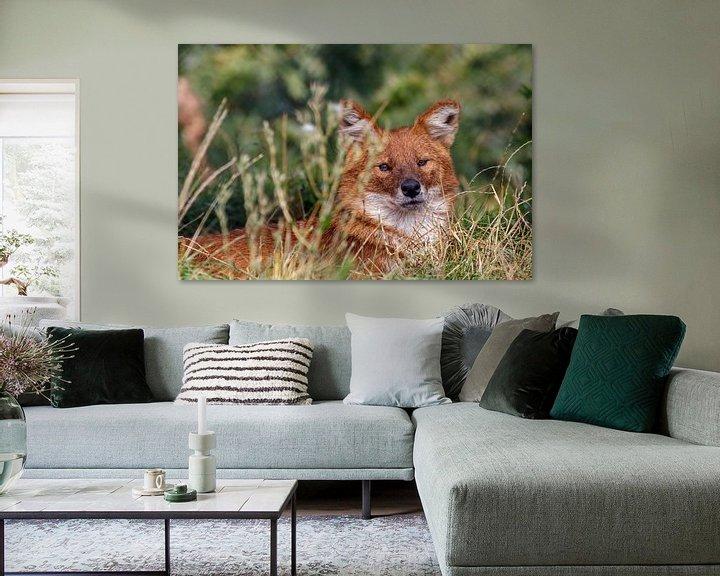 Sfeerimpressie: Aziatische wilde hond van Anjo ten Kate