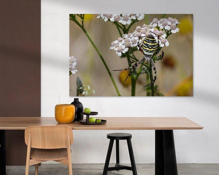 Beispiel: Die Wespenspinne (Argiope bruennichi) von Anjo ten Kate