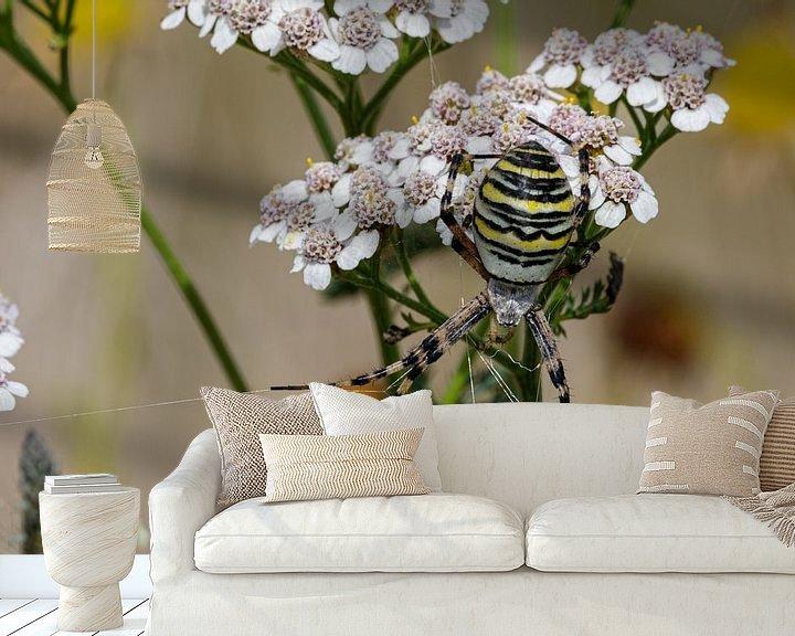 Beispiel fototapete: Die Wespenspinne (Argiope bruennichi) von Anjo ten Kate