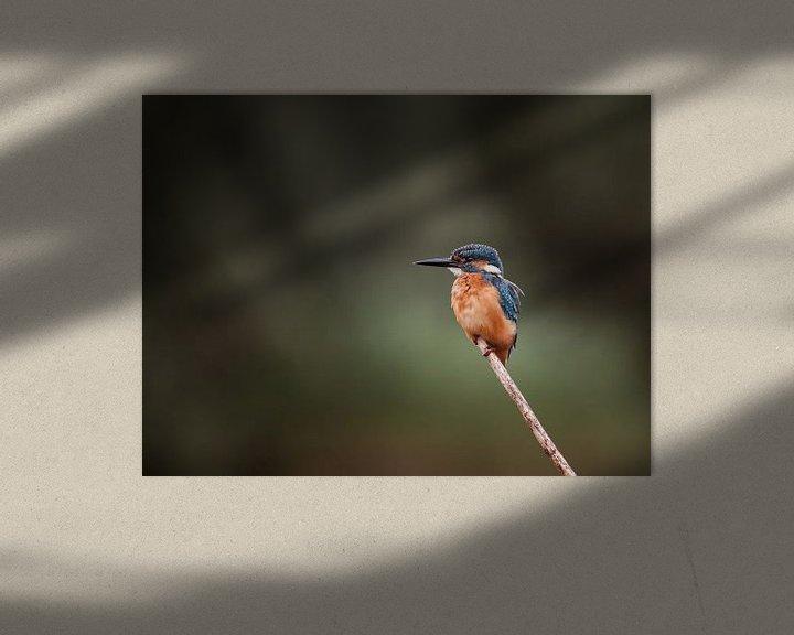 Sfeerimpressie: IJsvogel op tak in Nederlandse natuur portret van Maarten Oerlemans