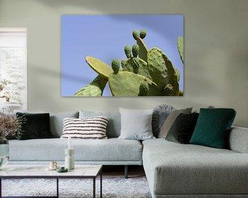 Figues de Barbarie vertes en été