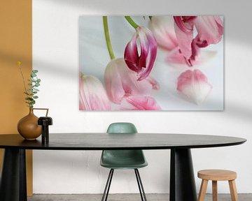 Tulpenblüten sur Roswitha Lorz