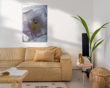 Gladiolus dans la glace 3 sur Marc Heiligenstein