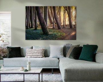 Waldweg im Licht von Martin Wasilewski