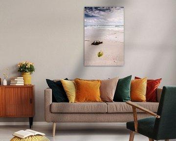 Zeewier op het strand van Richard Janssen