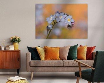 Farben des Frühlings - Vergissmeinnicht von Dagmar Hijmans