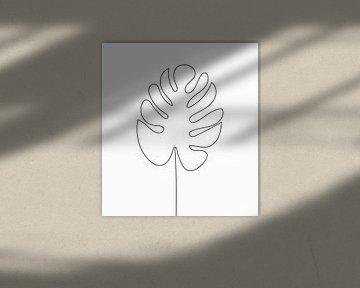 Strichzeichnung Monstera Blattlochpflanze von zippora wiese
