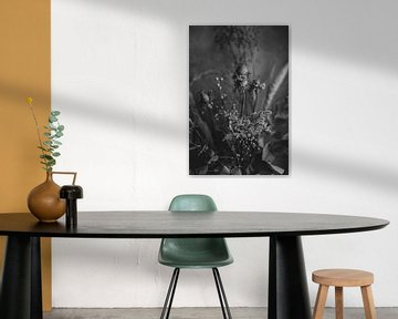 Droogbloemen in zwart-wit