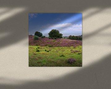 Posbank   Veluwezoom   Lande violette avec arbre   Cercle mural sur Ricardo Bouman