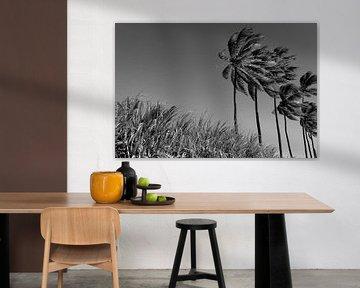 Kokospalmen van Stella JUMEAU