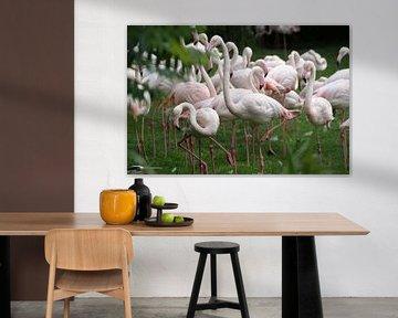 Flamingo's von Ronald en Bart van Berkel