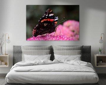 Een portret van een vlinder op een bloem van Gerard de Zwaan