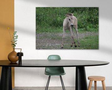 konikpaard Veulen van Richard Boon