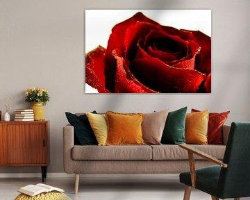 Roos Rood bloem von Erwin Plug
